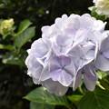 Photos: 離宮公園の夏至3