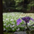Photos: 離宮公園の夏至4
