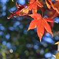 Photos: 彩りが進む森林のグラデーション1