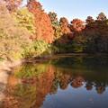 彩りが進む森林のグラデーション2