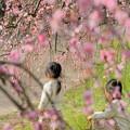 Photos: 春の華