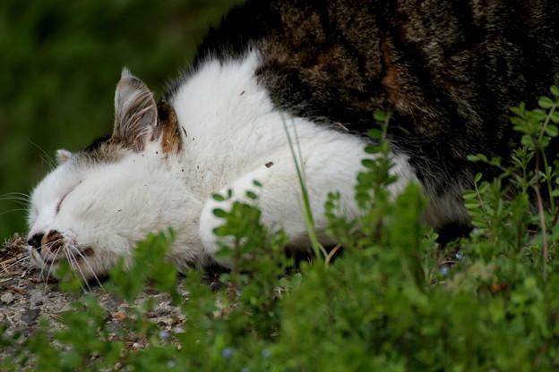 瀬戸際の微睡み