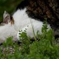 Photos: 瀬戸際の微睡み