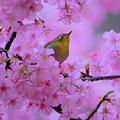 Photos: 春色に染まる