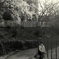 Photos: 山桜の咲く小道