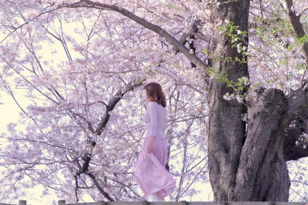 桜色に染まって~!