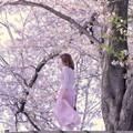 Photos: 桜色に染まって~!