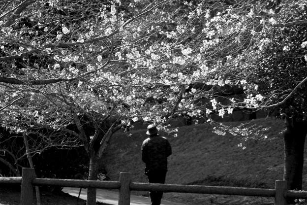 色のない春