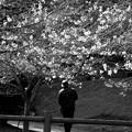 Photos: 色のない春