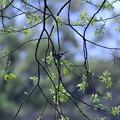 Photos: 春だよ~♪