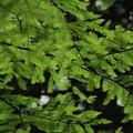 Green~Green~歌いたくなる~♪