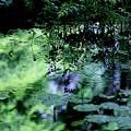 Photos: 緑の波紋