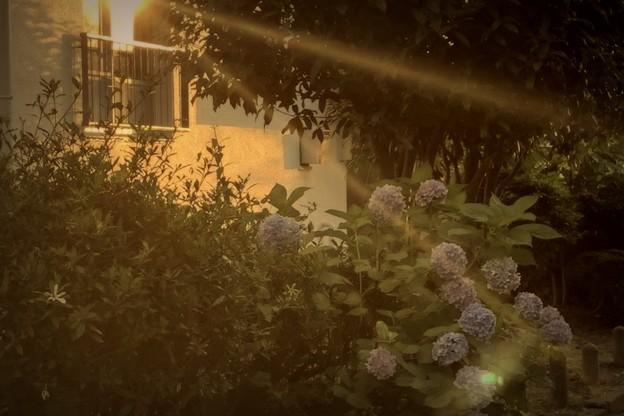 夕陽のなか~