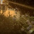 Photos: 夕陽のなか~