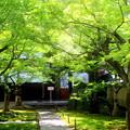 Photos: 新緑の庭