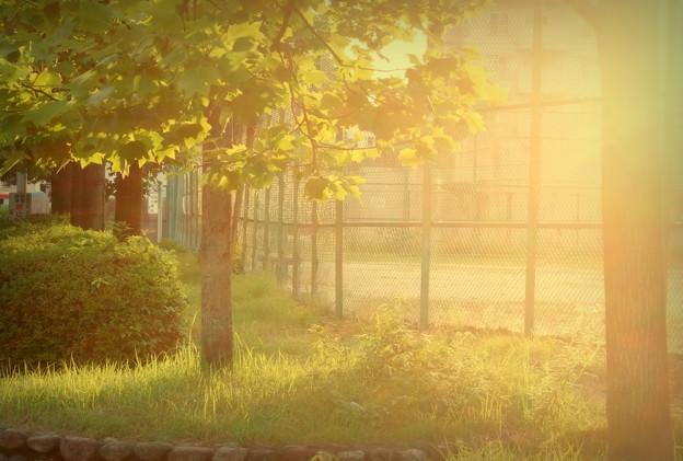夕暮れテニスコート