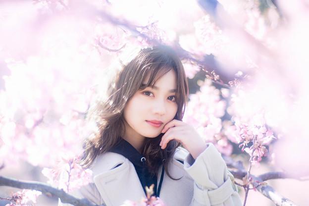 輝きの河津桜