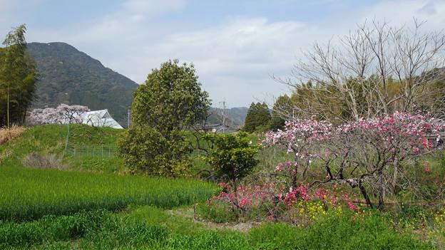 宝珠寺@2021 (24) 光蔵寺前の道から写す