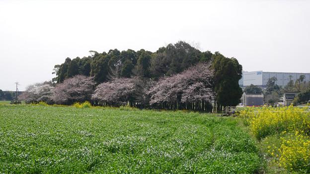 水車の里から梅の花神埼村へ (1)