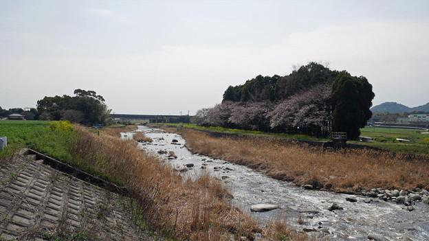 水車の里から梅の花神埼村へ (2)