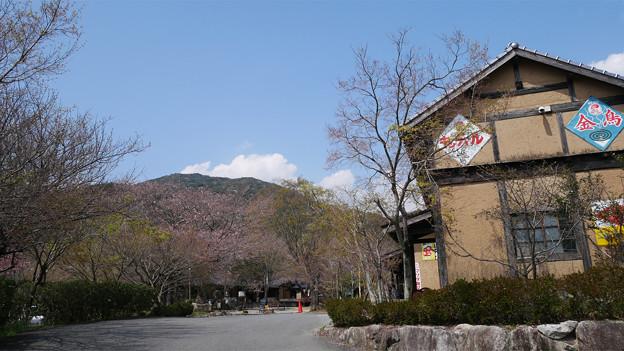 梅の花神埼村 (2)
