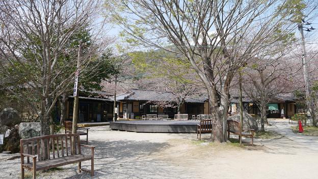 梅の花神埼村 (3)
