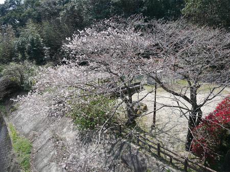 仁比山公園@2021 (1)