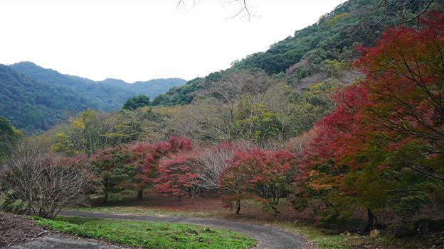 竜門峡周辺の紅葉