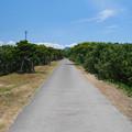 花鶴ヶ浜公園 (2)