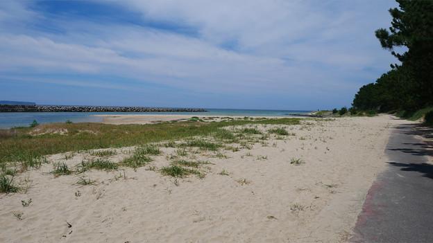 Photos: 花鶴ヶ浜公園 (9) 海へ遊歩道が続く