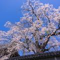 Photos: しんがり