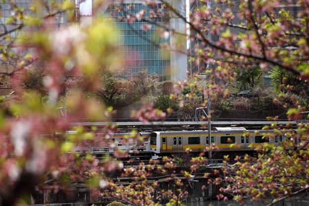 葉桜と列車