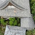 Photos: 浄光寺本堂8