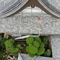 Photos: 浄光寺本堂9