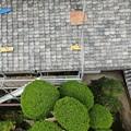 Photos: 浄光寺本堂12
