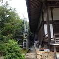 Photos: 浄光寺本堂14