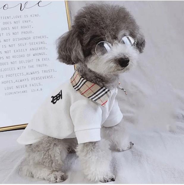 burberry ディオール ペット服と シャネル犬猫用品