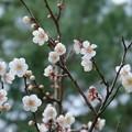 Photos: 白加賀