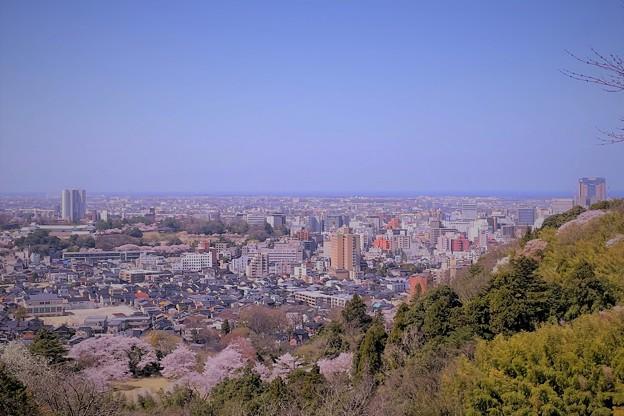 卯辰山から  桜(1)
