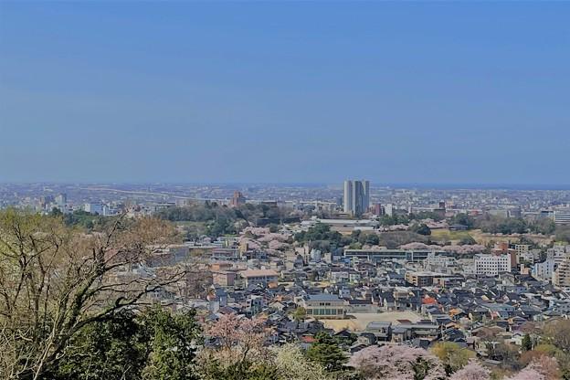 Photos: 卯辰山から 桜 (2)