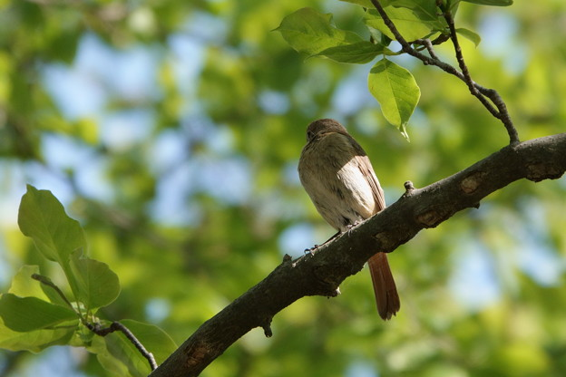 鳥 (2) ジョビ子ちゃん?