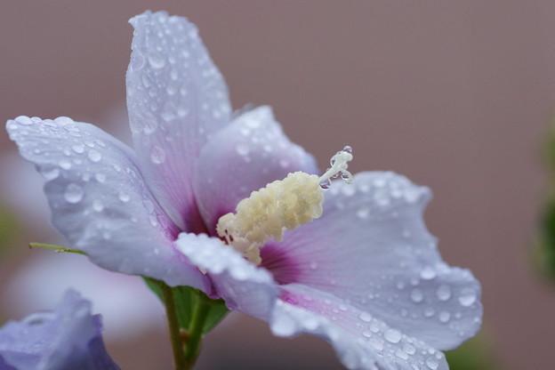 雨のしずく(1) 。゚・。・o゚・。゚・。・o゚☆