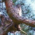Photos: アオバスクのヒナ(1) 巣立ち