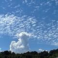 秋空に夏の雲