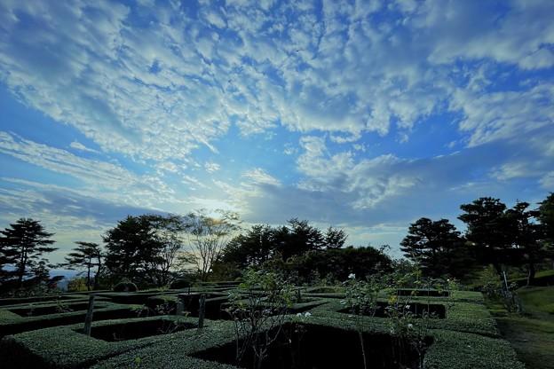 奥卯辰山健民公園 ベルギー庭園