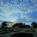 Photos: 奥卯辰山健民公園 ベルギー庭園