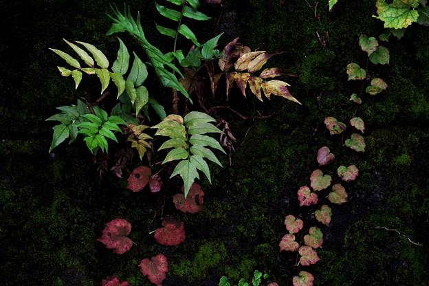 つる性植物