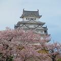 桜に埋もれた天守