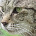 Photos: 美猫