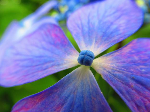 Photos: 装飾花